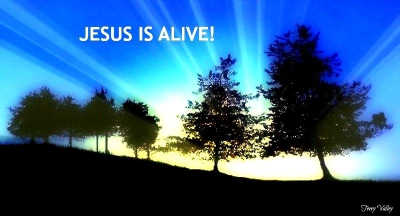TERRY'S GLUE TREES JESUS ALIVE